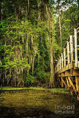 Caddo Lake Bridge Into The Forest II Poster by Tamyra Ayles