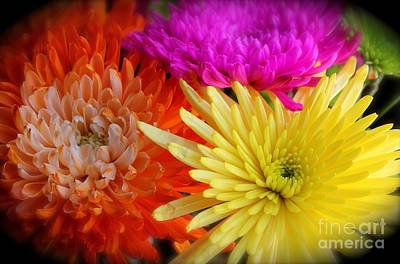 Bright Chrysanthemums Poster