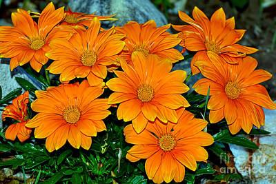 Bright Orange Daisy Garden By Kaye Menner Poster by Kaye Menner