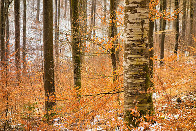 Bright Orange Leaves In Winterly Forest Poster