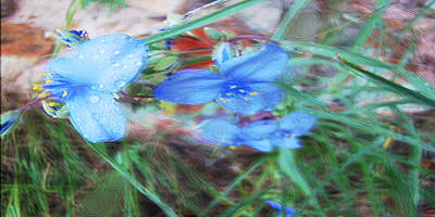 Poster featuring the photograph Brilliant Blue Flowers by Cathy Anderson