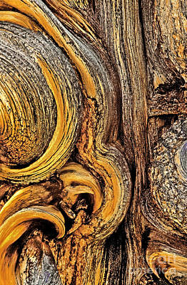 Poster featuring the photograph Bristlecone Pine Bark Detail White Mountains Ca by Dave Welling