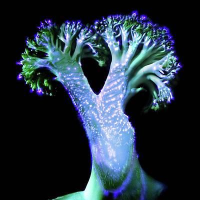 Broccoli Floret Poster by Robin Noorda