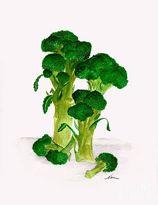 Broccoli Stalks Bright And Green Fresh From The Garden Poster by Nan Wright