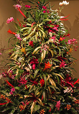 Bromeliad And Orchid Tree Poster by Suzanne Gaff