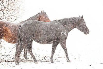 Broodmares In A Snow Flurry Poster by Terri Cage