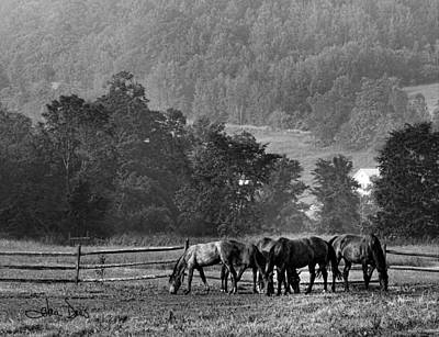 Poster featuring the photograph Broodmares by Joan Davis
