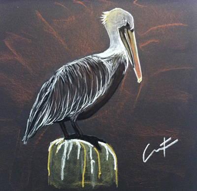 Brown Pelican At Shrimp Dock Poster