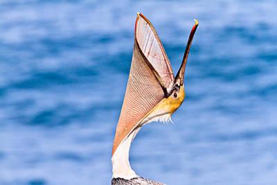 Brown Pelican - Head Throw Poster