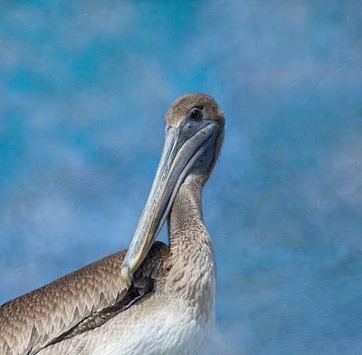Brown Pelican Poster by Kim Hojnacki