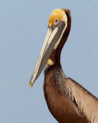 Brown Pelican Portrait Poster by Michael  Wolf