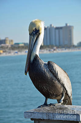 Poster featuring the photograph Brown Pelican by Robert Meanor