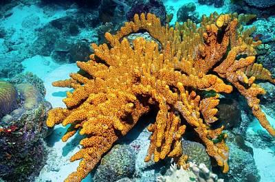 Brown Tube Sponge On A Reef Poster by Georgette Douwma
