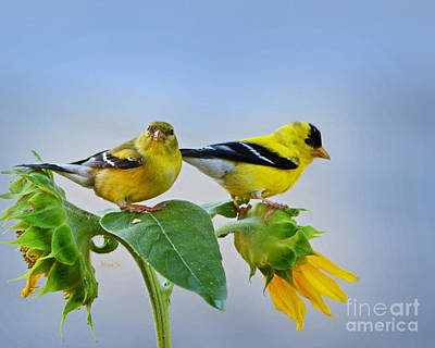 Sunflowers With Goldfinch Poster by Nava Thompson