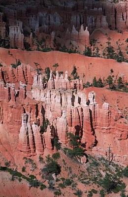 Bryce Canyon Hoodoos Poster by Dayne Reast