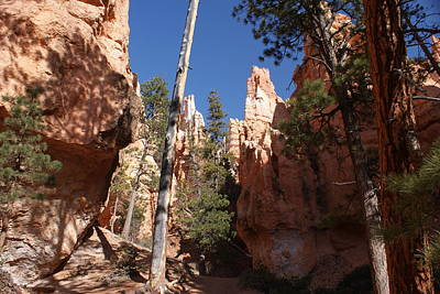 Bryce Canyon Trail Poster by Michael J Bauer