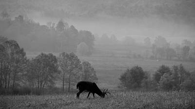 Buck In Cades Cove Black And White Poster by Dan Sproul