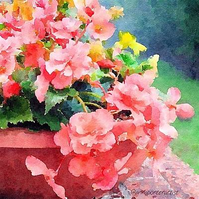 Bucket O Begonias Poster by Anna Porter