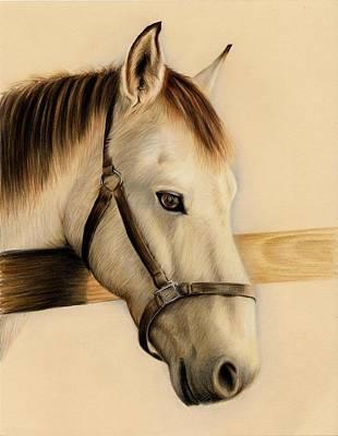 Buckskin  Poster by Heather Mitchell