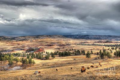 Buffalo Before The Storm Poster by Bill Gabbert