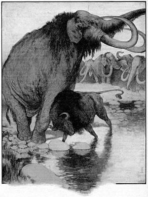 Buffalo Fighting A Mammoth Poster