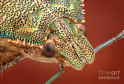Bug Head Poster