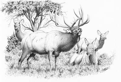 Bull And Harem Poster