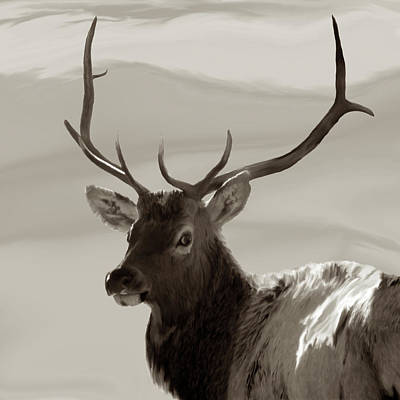Bull Elk Freehand Sepia Poster