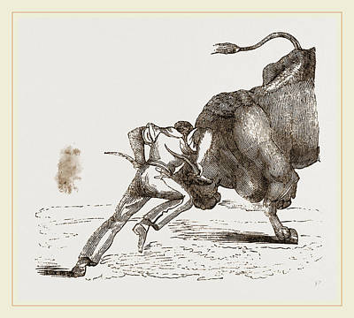 Bull Fight Poster by Litz Collection