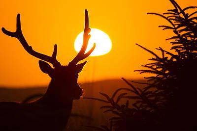 Bull In Velvet Sunset Silhouette Poster by Phil Johnston