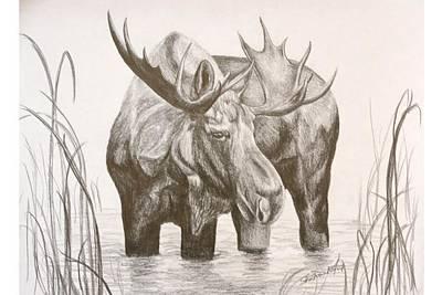 Bull Moose Poster by Sheri Marean