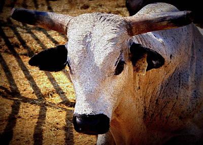 Bull Riders - Nightmare - Rodeo Bull Poster