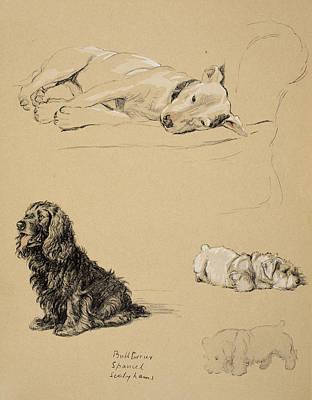 Bull-terrier, Spaniel And Sealyhams Poster