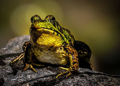Bullfrog Watching Poster