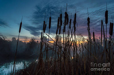 Bulrush Sunrise Poster
