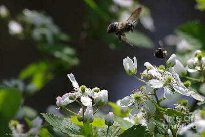 Bumble Bees In Flilght Poster by Tannis  Baldwin