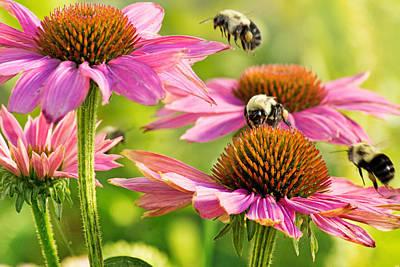 Bumbling Bees Poster