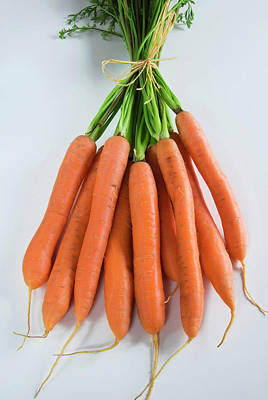 Bunch Of Carrots (daucus Carota Poster by Nico Tondini