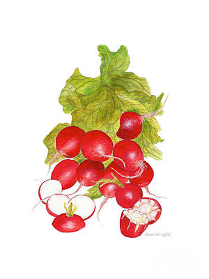 Bunch Of Radishes Poster by Nan Wright