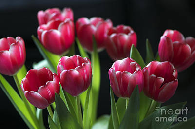 Bunch Of Tulips Poster by Sharon Talson