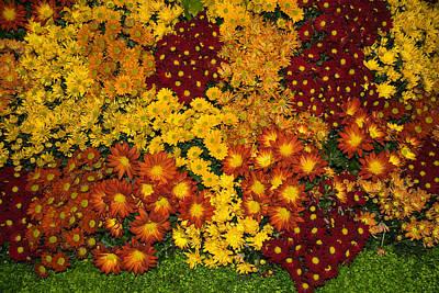 Bunches Of Yellow Copper Orange Red Maroon - Hot Autumn Abundance Poster by Georgia Mizuleva