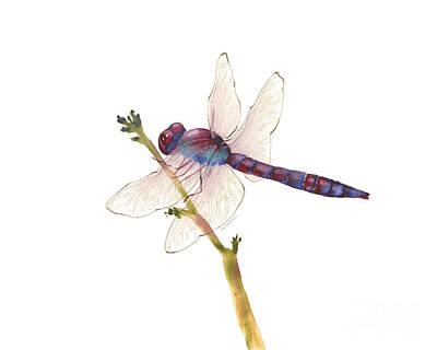 Burgundy Dragonfly Poster by Amy Kirkpatrick