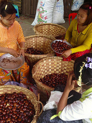 Poster featuring the photograph Burmese Ladies Sorting Water Chestnuts Zay Cho Street Market 29th Street Mandalay Burma by Ralph A  Ledergerber-Photography