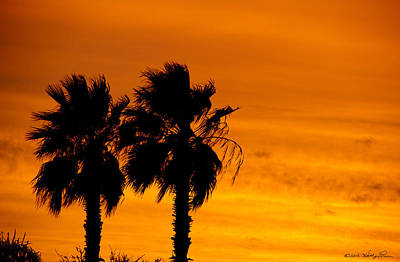 Poster featuring the photograph Burning Palms by Kathy Ponce