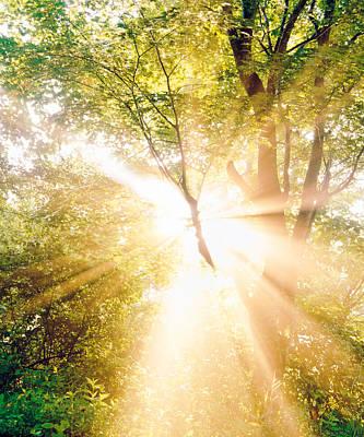 Burst Of White Light Through Green Trees Poster
