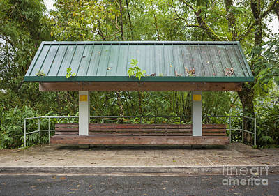 Bus Stop Bench In The Rainforest  Poster