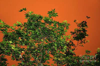 Bushfire Skies Poster by Kaye Menner