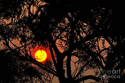 Bushfire Sunset Poster by Kaye Menner