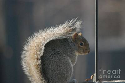Poster featuring the photograph Bushy Tail by Mark McReynolds