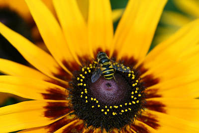 Poster featuring the photograph Busy Bee by Denyse Duhaime